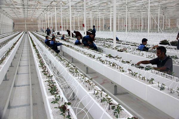 بخش کشاورزی ظرفیتهای قابل توجهی در اشتغالزایی دارد