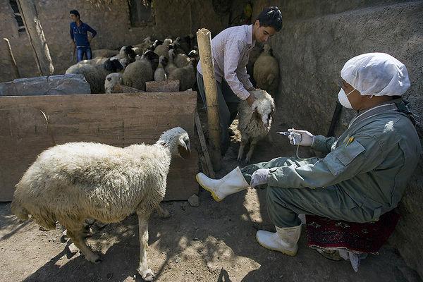 اعزام تیم کنترل تب کریمه در مناطق زلزله زده