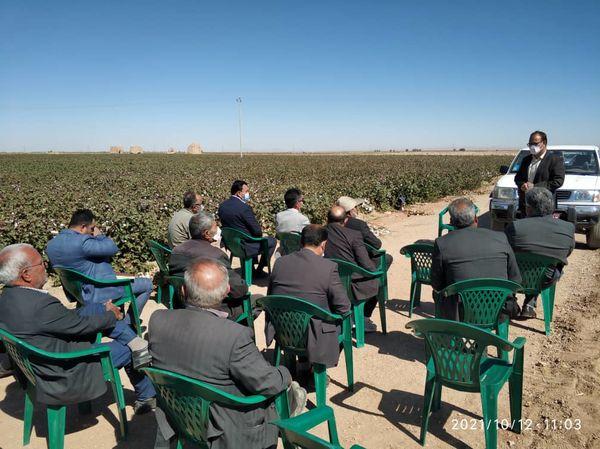 برگزاری کلاس آموزشی ترویجی روز مزرعه  پنبه در بشرویه
