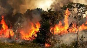 میزان حریق در جنگلهای امسال، بیش از متوسط 13 سال گذشته
