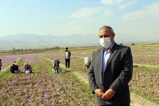 بناب جدید شهرستان مرند قطب زعفران شمالغرب کشور محسوب میشود