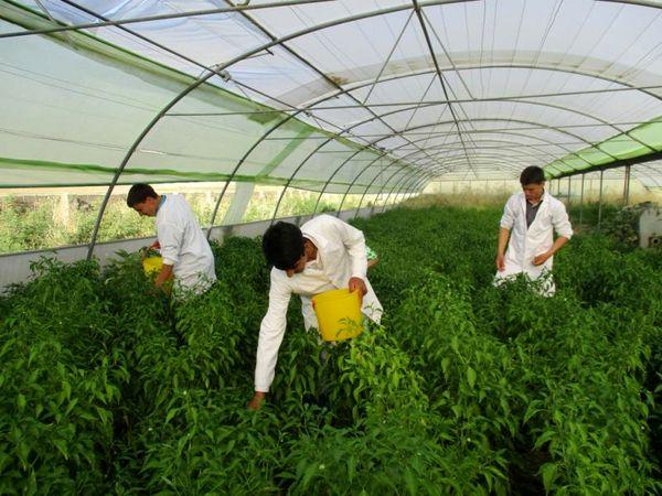 توسعه کشت محصولات گلخانهای در دستور کار قرار دارد