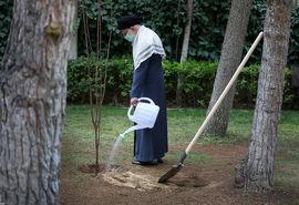 کاشت نهال در هفته منابع طبیعی توسط رهبر انقلاب اسلامی