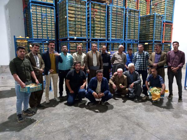 تعاونی تولید باغات کلاترزان گام صادرات میوه به خارج از کشور