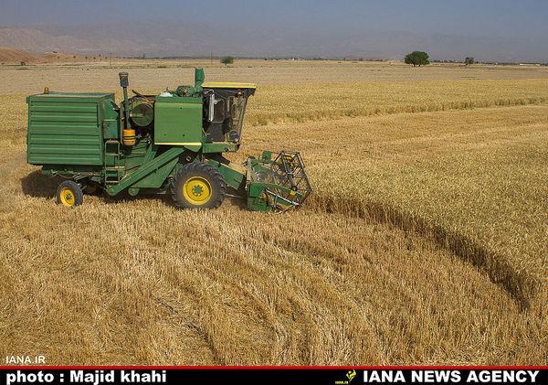 خرید هزار تن گندم از کشاورزان خراسان جنوبی