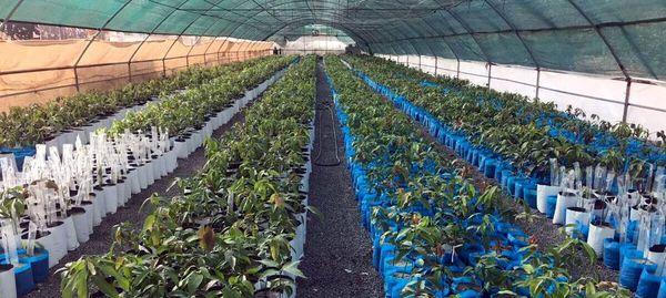 رشد ۱۰۰ درصدی تولید نهال در اصفهان