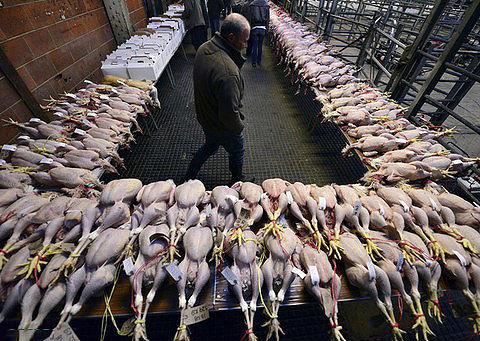 با قیمت یک کیلو گوشت گوسفند، چند کیلو گوشت بوقلمون میتوان خرید؟