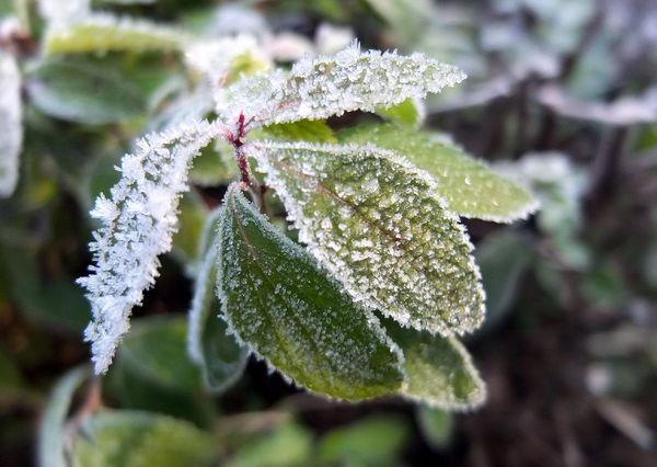 کابوس سرما در بهار