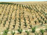 توسعه باغات در 60 هکتار از  اراضی شیب دار شهرستان خداآفرین