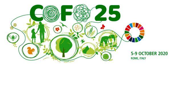 توقف بهره برداری صنعتی از جنگلهای هیرکانی الگوییبرای حفاظت جنگل های طبیعی 
