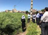 برگزاری مراسم روز مزرعه کلزا در شهرستان بناب