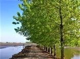 تامین آب 55 درصد شالیزارهای جویبار از طریق آببندان ها