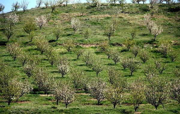 بهره برداری از 17 هزار هکتار باغ در اراضی شیبدار