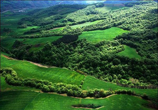 شناسایی 15 منطقه با تنوع زیستی بالا در جنگلهای هیرکانی