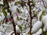 سرما ۲۸۰ میلیارد ریال به بخش کشاورزی رازوجرگلان خسارت زد