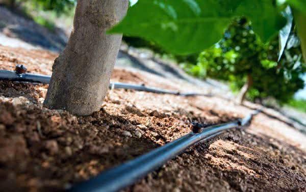 تجهیز 11 هکتار از باغات شهرستان سامان به سامانه های نوین آبیاری