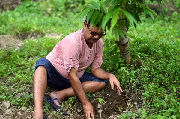 کاشت درخت، گزینه مناسبی برای کاهش آلودگی هوا ناشی از سوختهای فسیلی نیست