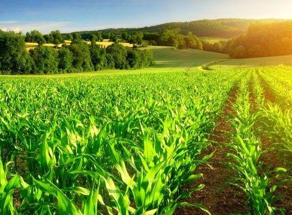 لزوم بهره برداری بهینه و افزایش بهرهوری در بخش کشاورزی