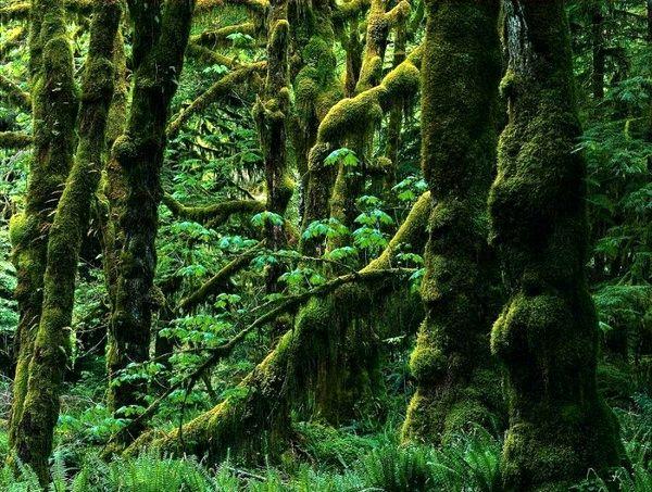 راه نجات جنگل های هیرکانی اجرای طرح تنفس است