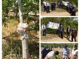 برگزاری کارگاه آموزشی پیوند و سرشاخه کاری درختان گردو