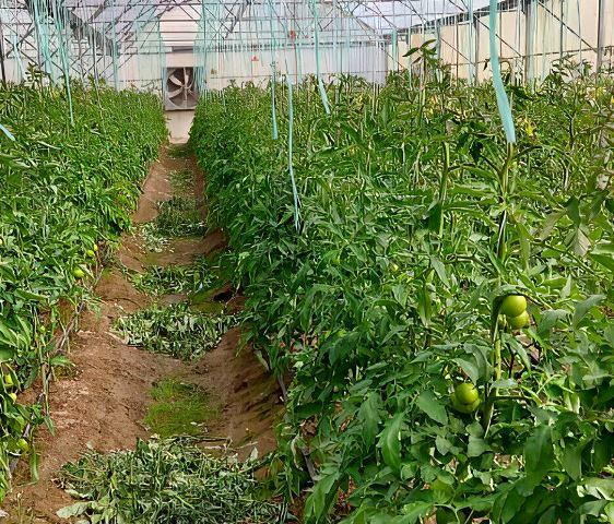 سرمایهگذار متقاضی احداث گلخانه در اصفهان منتظر تسهیلات هستند