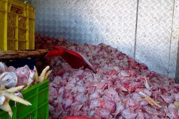 یک هزار و ۶۰۰ کیلوگرم گوشت و مرغ فاسد در تهران معدوم شد