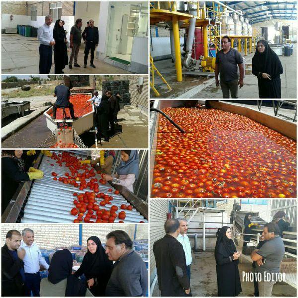 رونق کارخانه رب اسفراین معطل چراغ سبز بانک کشاورزی