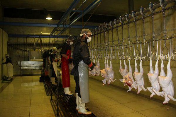 تولید گوشت مرغ در چهارمحال و بختیاری مازاد بر نیاز است