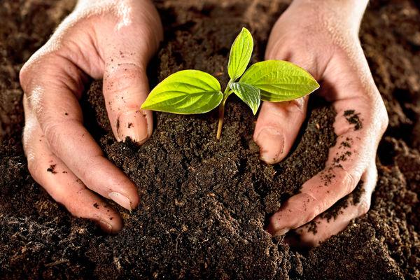 جهش تولید در خاک دیمزارهای کشور با مدیریت و ارتقای ماده آلی خاکهای کشاورزی
