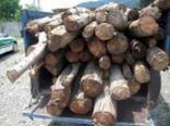 1.5 تن چوب قاچاق در جنوب غرب پایتخت کشف شد