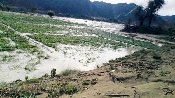 سیلاب 613 میلیارد تومان به بخش کشاورزی سیستان و بلوچستان خسارت زد