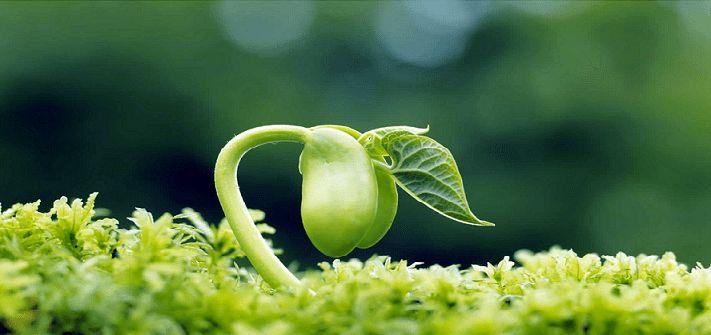 تولید بذر گواهی شده هویج در کشور با حذف ارز ترجیحی