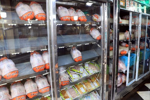 بیش از 113 تن مرغ گرم در قزوین توزیع شد