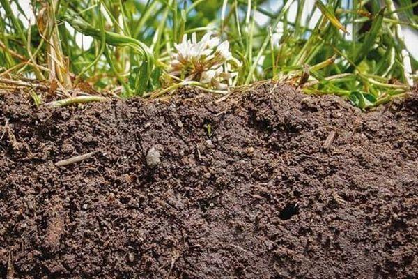 بیتوجهی به خاک بیش از آب است