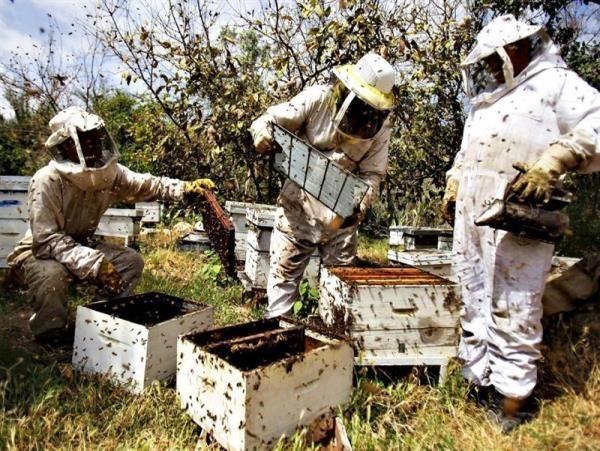 خسارت ۱۴ میلیاردی کرونا به زنبورداران مازندران