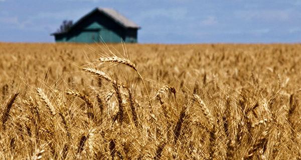 صادرات گندم روسیه از ابتدای فصل زراعی امسال 11 درصد رشد یافت