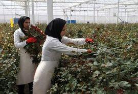 68 طرح گلخانهای در استان سمنان در دست اجرا است