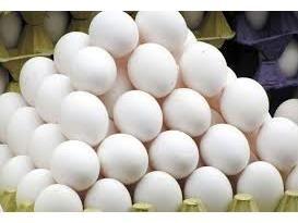 تولید 3500 تنی تخم مرغ در آمل