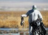 هشدار برای مقابله و کنترل ویروس آنفلوانزای فوق حاد پرندگان