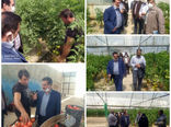 وجود ۱۰۱واحد گلخانه به مساحت ۳۰ هکتار در شهرستان تبریز