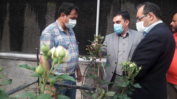 زنجیره تولید گلهای زینتی سبب ایجاد اشتغال خرد و خانگی میشود