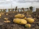 ۳۰ هزار تن سیبزمینی روی دست کشاورزان فریدونشهر مانده است