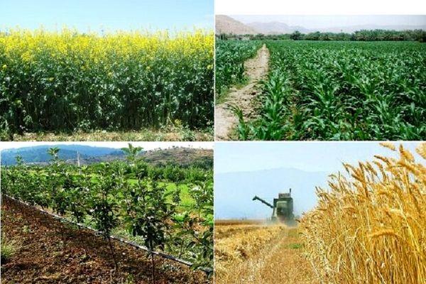 افزایش تولید در واحد سطح اولویت جهاد کشاورزی سرایان