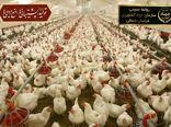 آزاد سازی مجوز احداث مرغداری در خراسان شمالی
