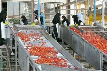ظرفیتسازی برای فرآوری ۸۰ هزار تن محصولات کشاورزی