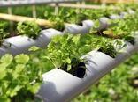 از کاهش مصرف آب تا افزایش بهره وری محصول باکشت هیدروپونیک