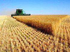 خرید تضمینی حدود ۱۵ هزارتن محصول استراتژیک گندم از کشاورزان