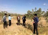 بازدید کارشناسان مرکز تحقیقات کشاورزی و منابع طبیعی از سایت الگویی ملی پسته بوئین زهرا
