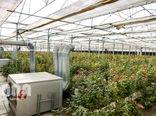 واگذاری شهرکهای کشاورزی تا پایان سال جاری به 9هزار هکتار میرسد