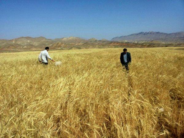 اجرای طرح یاوران تولید همزمان با سراسر کشور در استان مرکزی
